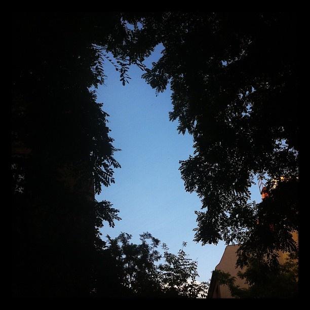 Alligator in the sky