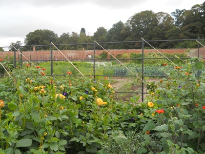 Walled Garden, Attingham Park: Walled Garden, Wall Gardens