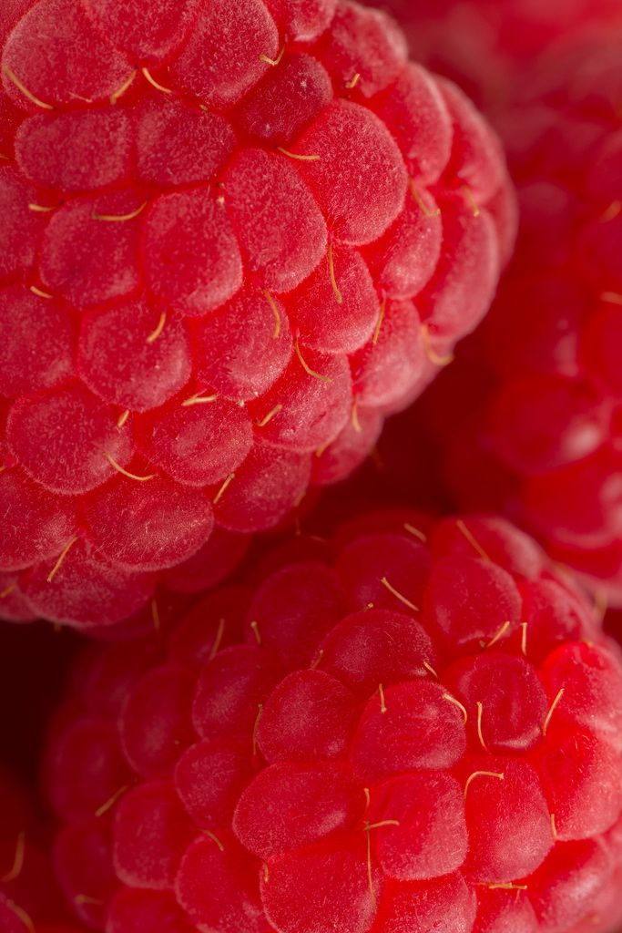 fruit > Raspberries zoOm (by JaSphotography 2013 https://www.flickr.com/photos/jenzpix/8559527036/in/photostream)