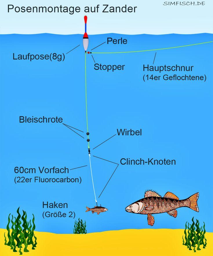 Zander angeln mit Pose und Köderfisch