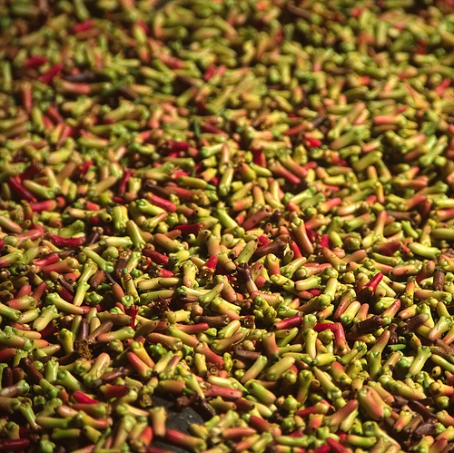 Bali (Indonesia) - Drying cloves