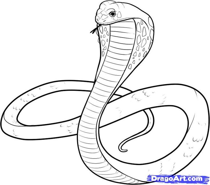 snake drawings for kids | King Cobra Coloring Pages