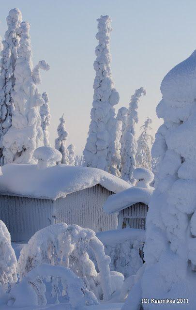 Winter Wonderland - ** Valokuvauksia / My Photos: Tykkyä Riisitunturilla