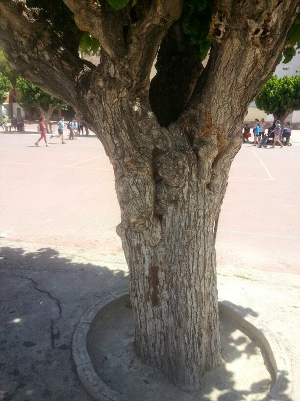 The tree of the playground is wrinkled and bumpy.