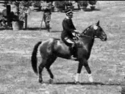 Equitazione Salto ostacoli p.Siena1930 Premio Esquilino