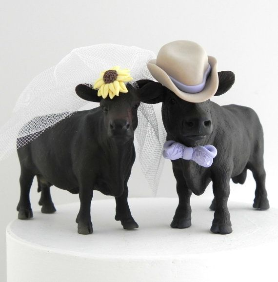 Angus cattle rank among the most famous and popular cattle breeds throughout the world. Heres a cute cow and bull couple for your southwestern,