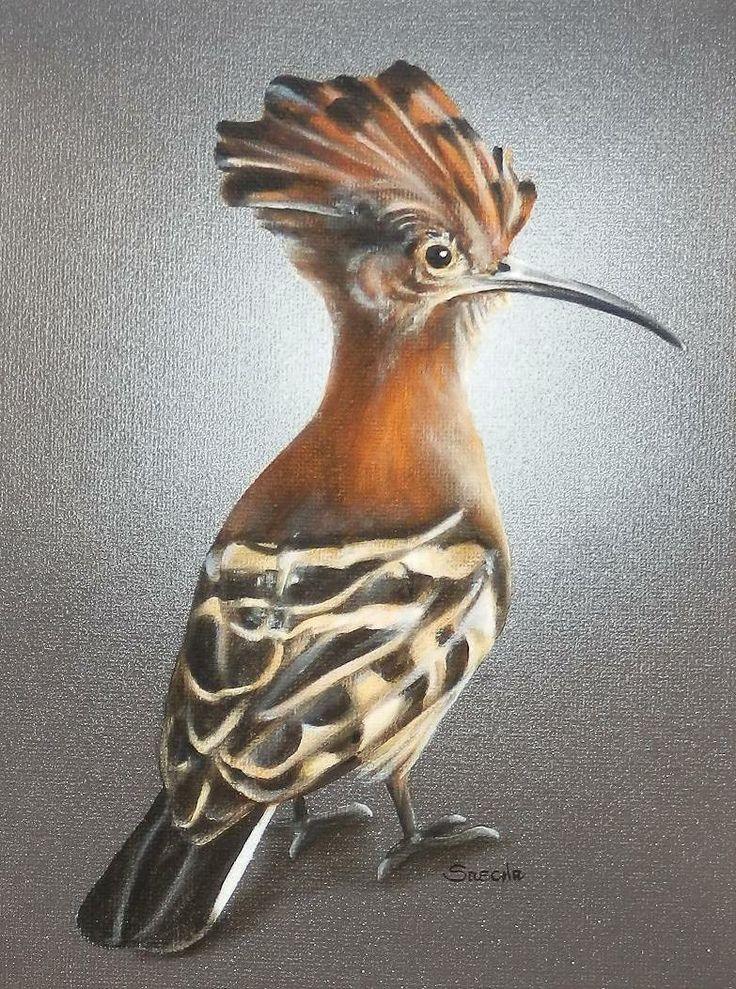 African Hoopoe: Oil on Canvas