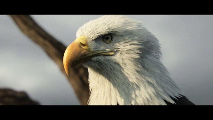 Assassins Creed 3 on Vimeo
