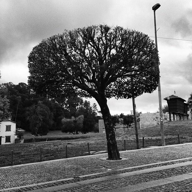 #tree #streetphoto #streetphotography #eav #eavig #iphonegrahy