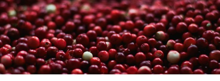 Cranberry cordial recipe with spices like cloves, cinnamon, orange - delicious and easy, the hardest part is waiting for it to be ready!