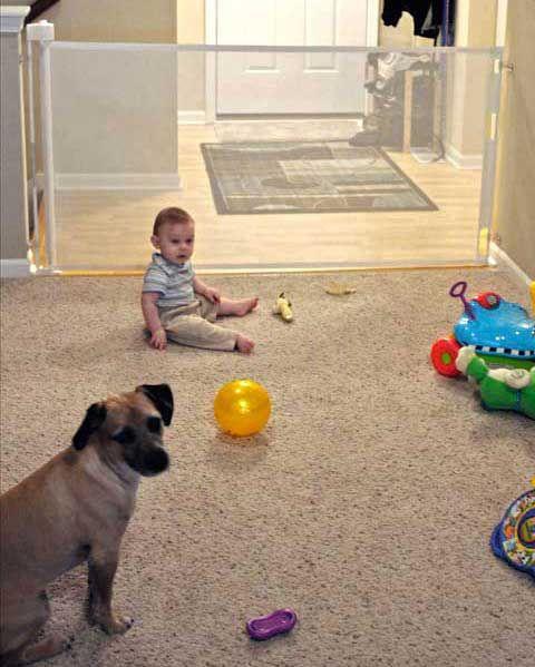 Safety dog gate testimonials at Retract-A-Gate.