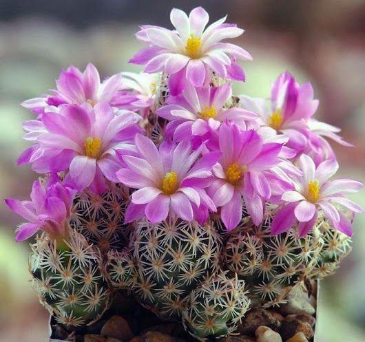 love cactus cactus identificationspineindoor gardenindoor plantsexotic