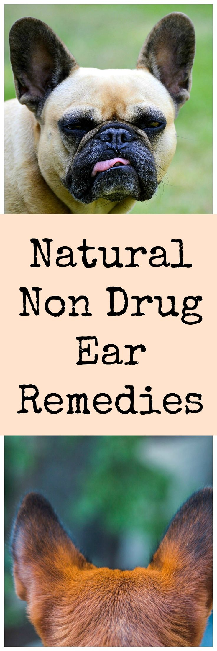 Natural remedies for ear itching and redness in dogs.