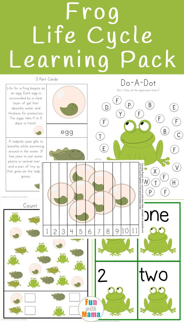 Lava lamp experiment worksheet - Frog Life Cycle Learning Pack