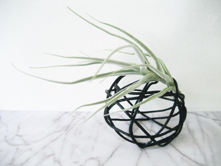 Air Plant Display Idea | Adorablest