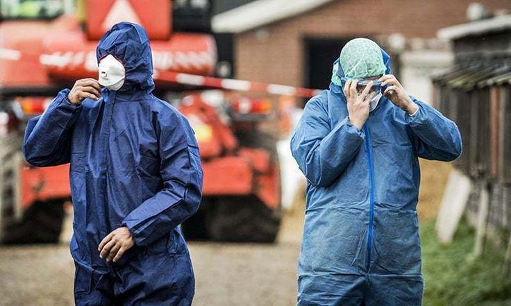 Dutch cull 190,000 ducks to contain bird flu outbreak