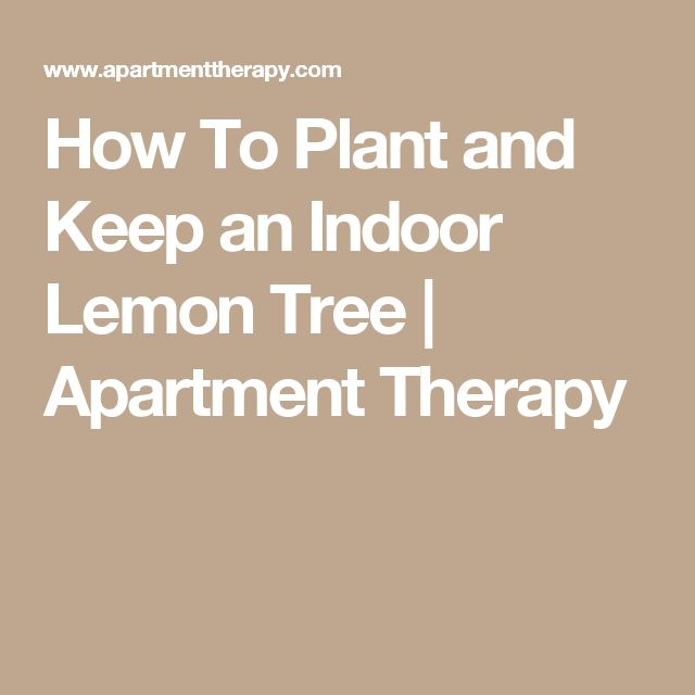 Best 25+ Indoor lemon tree ideas on Pinterest | Lemon plant, Buy ...