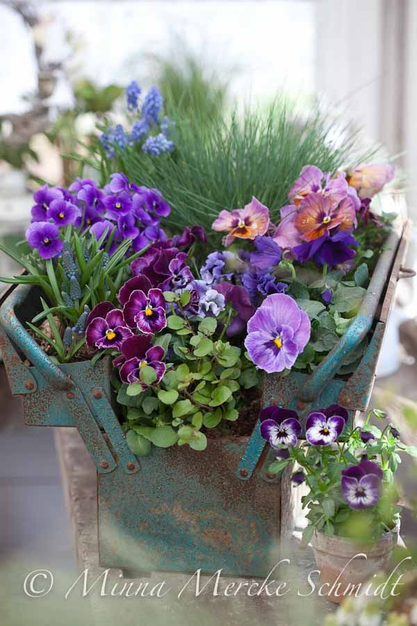 Old tool box filled with spring blooms
