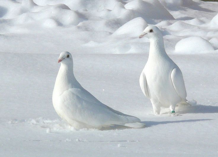 What You Do Know? . .,White Doves In The Snow.