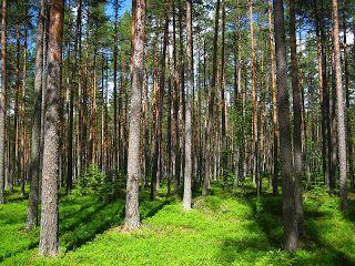Riihimäki vaalii luontoa ja virkistysalueita.