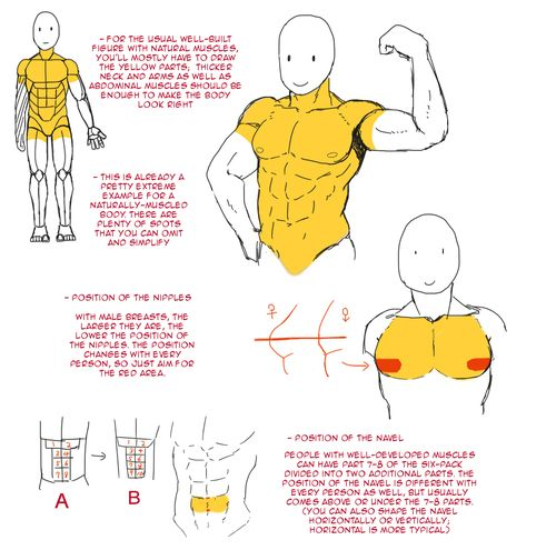 the 25 best images about anatomy - muscles on pinterest | comic, Muscles