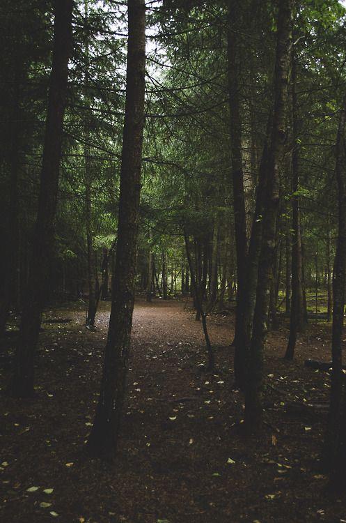 landscape nature forest fade woods nikon d7000 most west