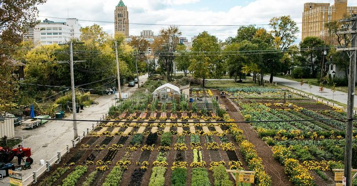 Curbed's video team recently visited the Michigan Urban Farming Initiative and their urban agrihood in the middle of Detroit.