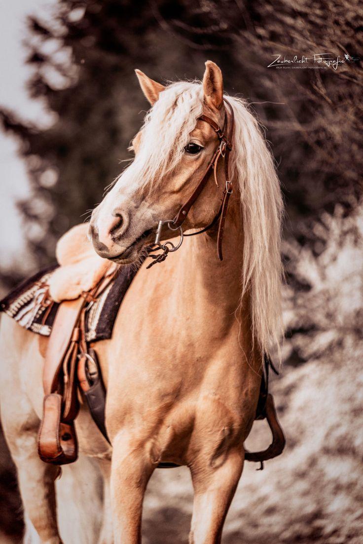 Western Haflinger Zauberlicht Fotografie | Pferd | Bilder | Pferdeshooting | Fotoshooting | Pferdefotograf | Ideen | Inspiration | horse | equine phot…
