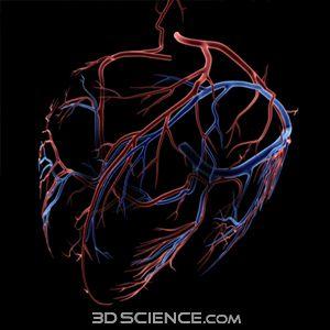 Human Heart Vessels 3D Models