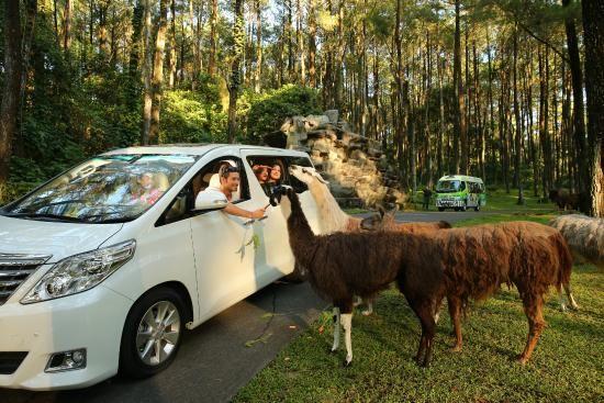 Informasi tentang harga tiket taman Safari Prigen terbaru