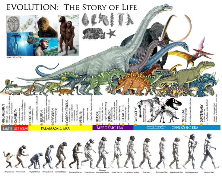 EVOLUTION: The Story of life │ The Prehistoric ERAS │ Dinosaur Timeline ~ Zsite59