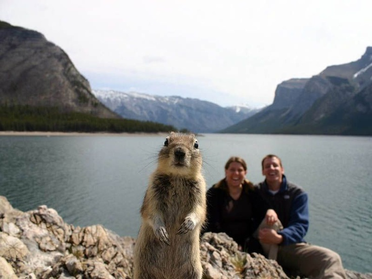 There is nothing quite like the beauty of nature. That's at least what Melissa and Jackson Brandts thought when they set up their camera to capture themselves in front of Lake Minnewanka in Banff National Park in Canada. But sometimes Mother Nature has a funny way of intervening. Just before their camera clicked on a timer, a squirrel found its way into the frame.