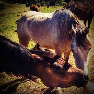 Spend time with the horses.