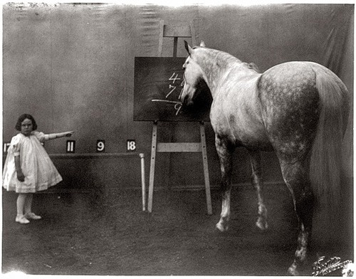 Life is just better when your horse can do math: Girl, Horses, Educated Horse, Prince Albert, Horse Maths, Vintage Photo, Famous Educated, Animal