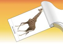Step Book: Animals of the Savanna - Materials for children in pre-K and kindergarten from KiGaPortal.com