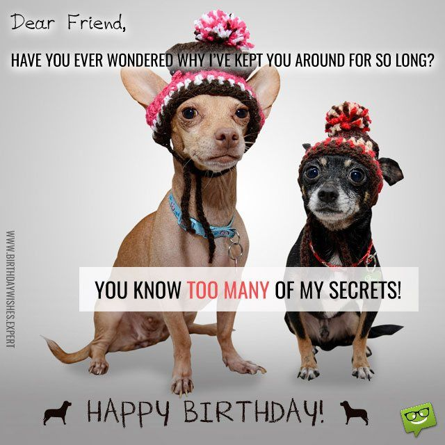 Best 25+ Funny Happy Birthday Pictures Ideas On Pinterest