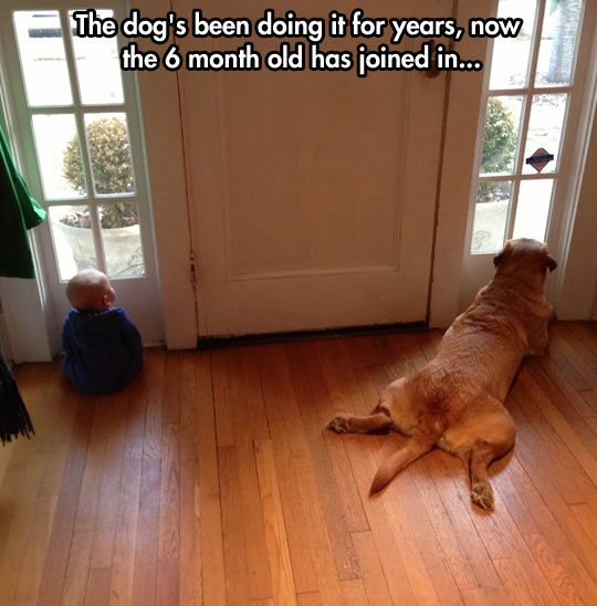 Waiting together // funny pictures - funny photos - funny images - funny pics - funny quotes - #lol #humor #funnypictures