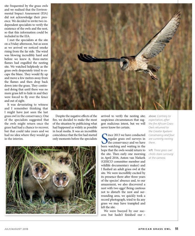 Kyalami African Grass Owls 2