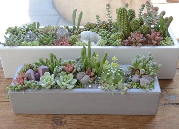 Plante Grasse Interieur Decoration Jardin Cactus Jardin Idees