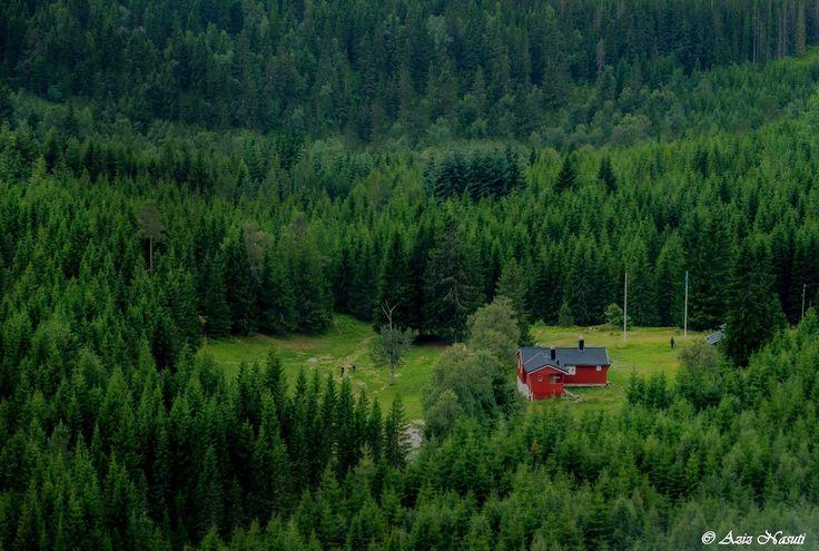 Bymarka. Trondheim by Aziz Nasuti on 500px