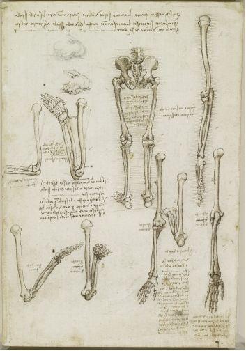 Los huesos del brazo y la pierna 1510-11