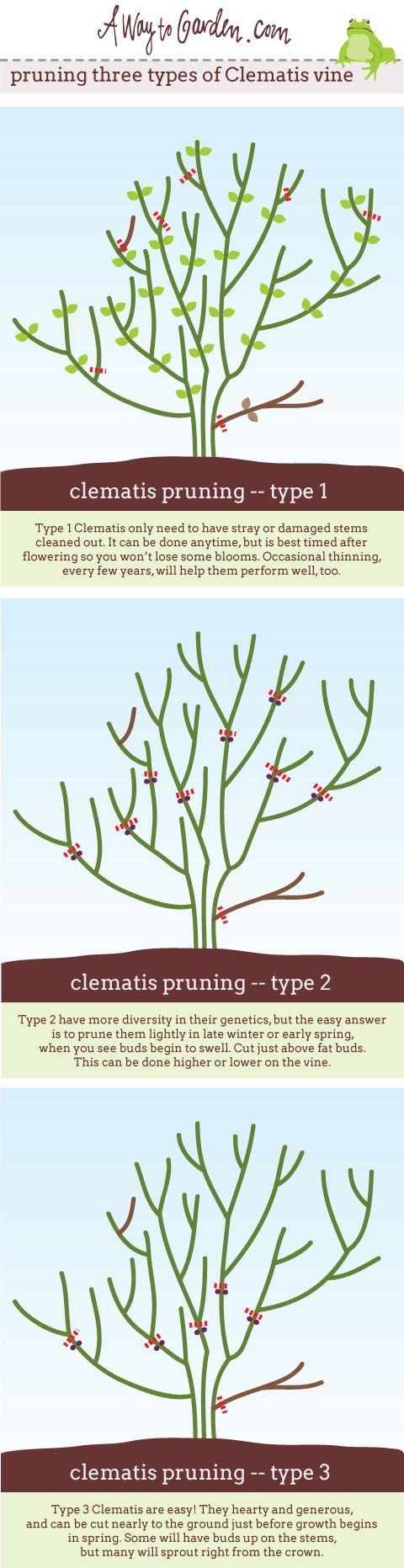 best gardening tips images on pinterest gardening vegetable