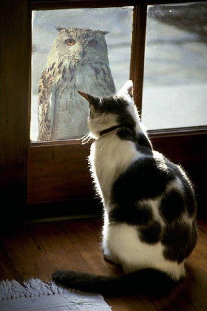 Cat:  Boy that is one ugly  bird.     Glad I'm inside