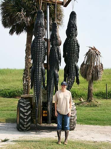 Florida Hunting Guides, Outfitters and Lodges offering Gator, Hog, Turkey and Whitetail Hunts - http://www.worldclassoutdoors.com/florida-hunts