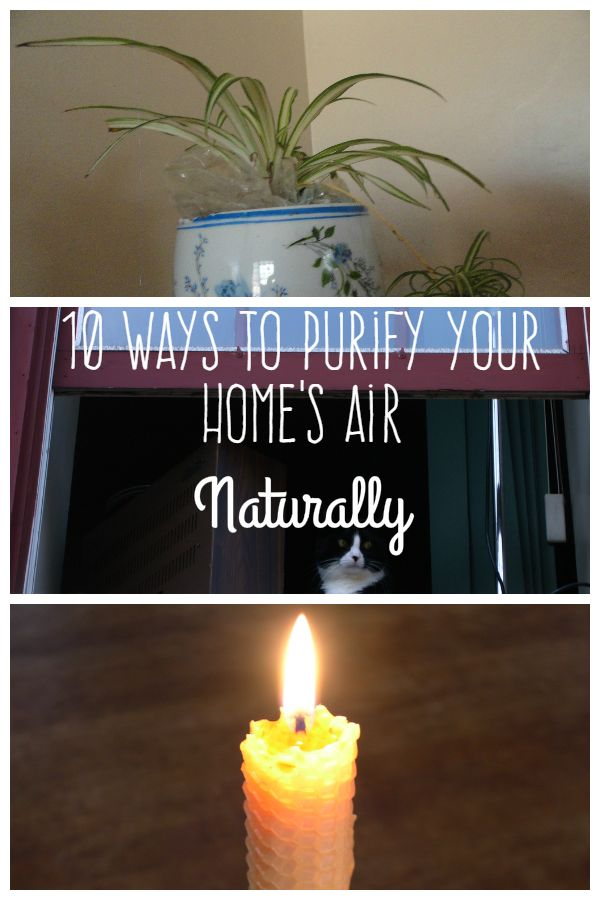 10 Easy Ways To Purify Air Naturally At Home