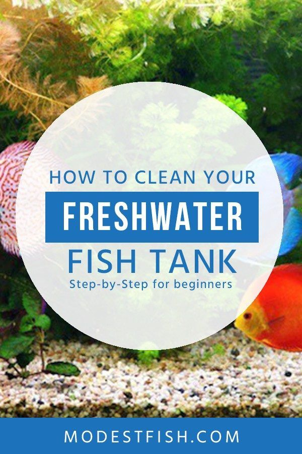 How To Clean A Freshwater Fish Tank Water Change Guide For Beginners Fresh Water Fish Tank Fish Tank Fish Tank Cleaning