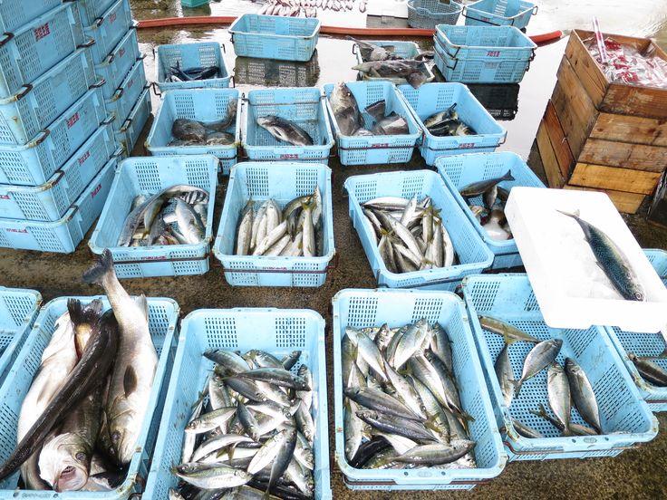 網野町 浜詰漁港 am 6:00