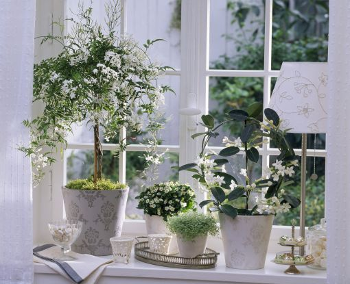 Träd i fönster, krukor på bricka. Högt och lågt
