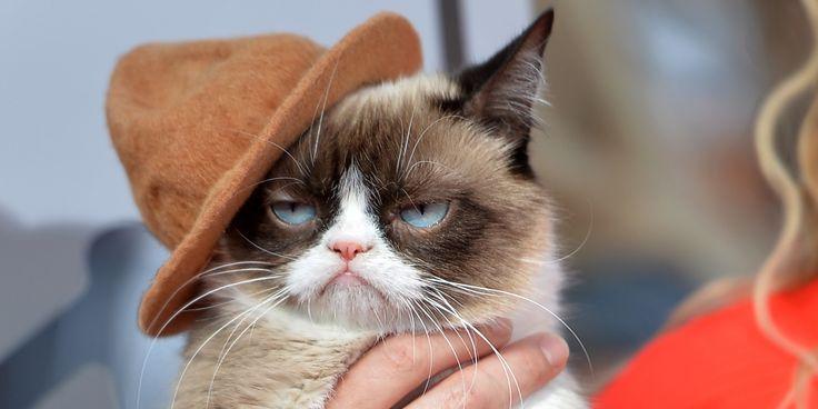 The Grumpy Cat Movie Trailer Is Here -Cosmopolitan.com