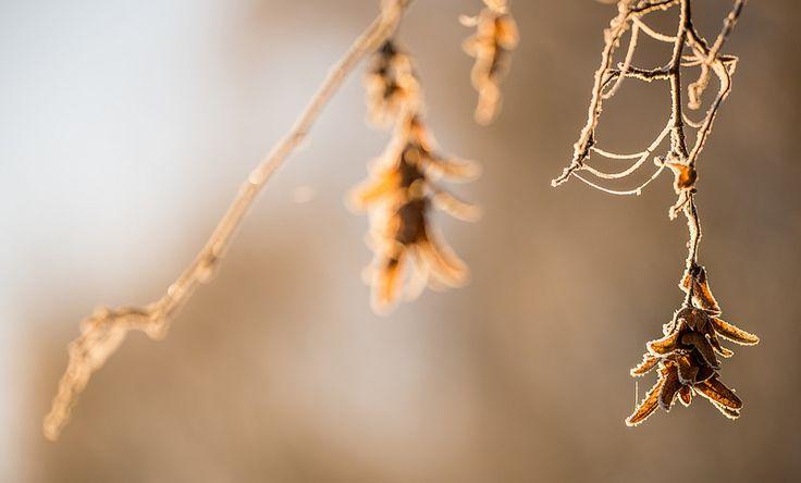 hanging in the sun   by Gilbert de Bruijn